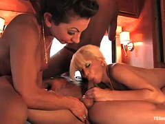 three hot horny shemales having fun with one dude in the hottub